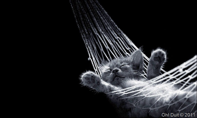 lazy cat oh duit 2
